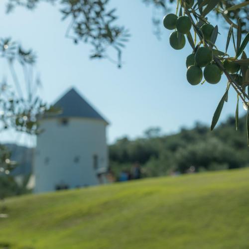 Shodoshima Olive Park